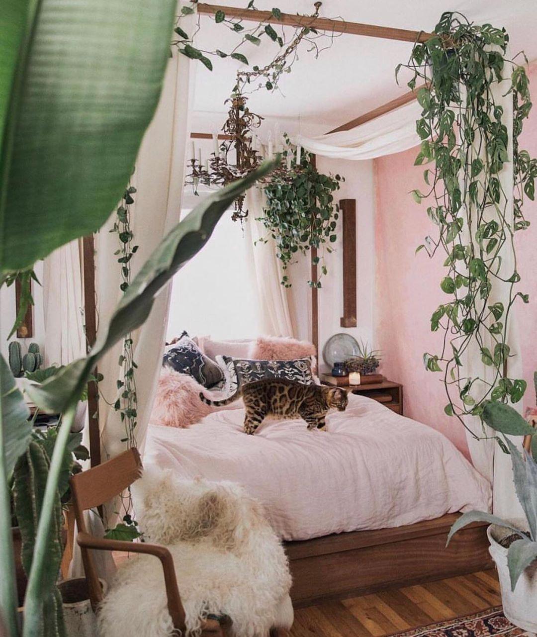 quarto rosa com plantas