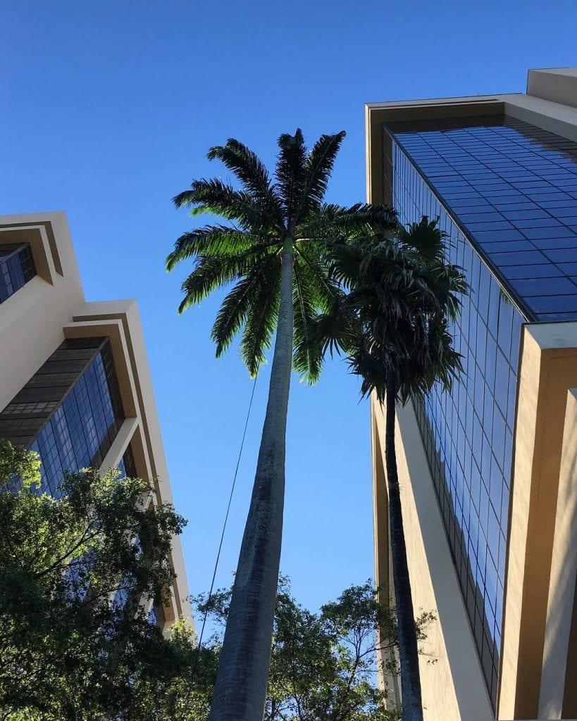 palmeira-imperial-paisagismo