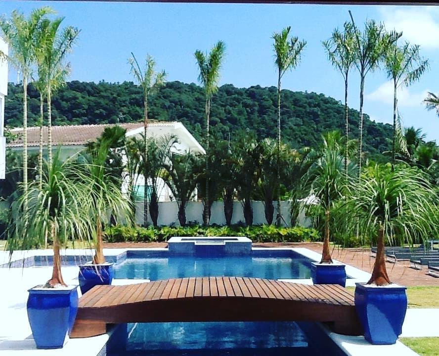 palmeira imperial paisagismo jardim piscina