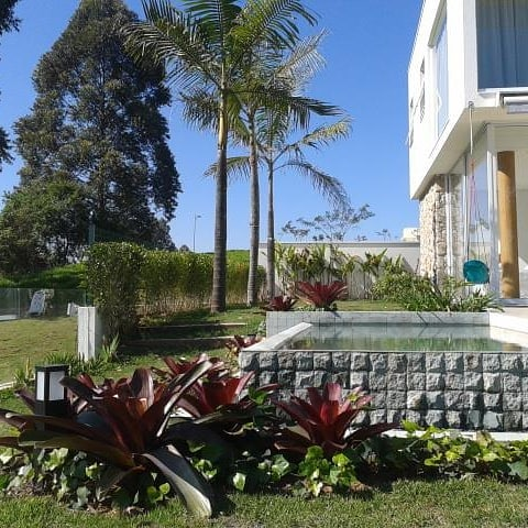 palmeira imperial paisagismo jardim fachada casa