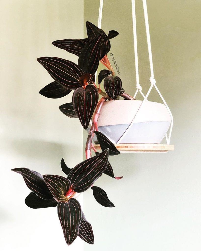 orquidea-dentro-de-casa