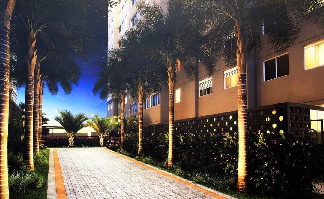 palmeira imperial paisagismo jardim entrada casa
