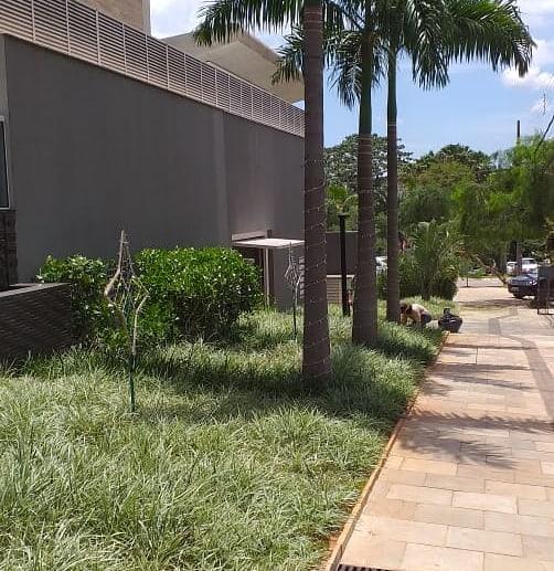 palmeira imperial paisagismo jardim fachada