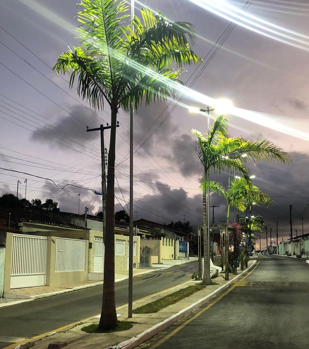 palmeira imperial paisagismo