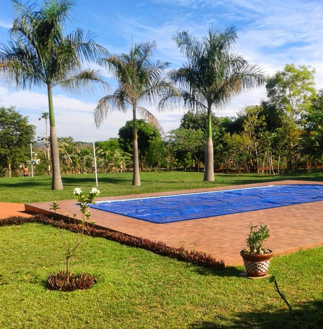 palmeira imperial em jardim perto de piscina