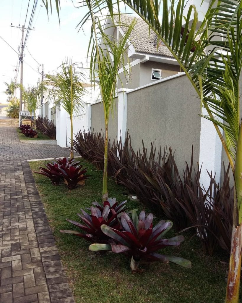 jardim-palmeira