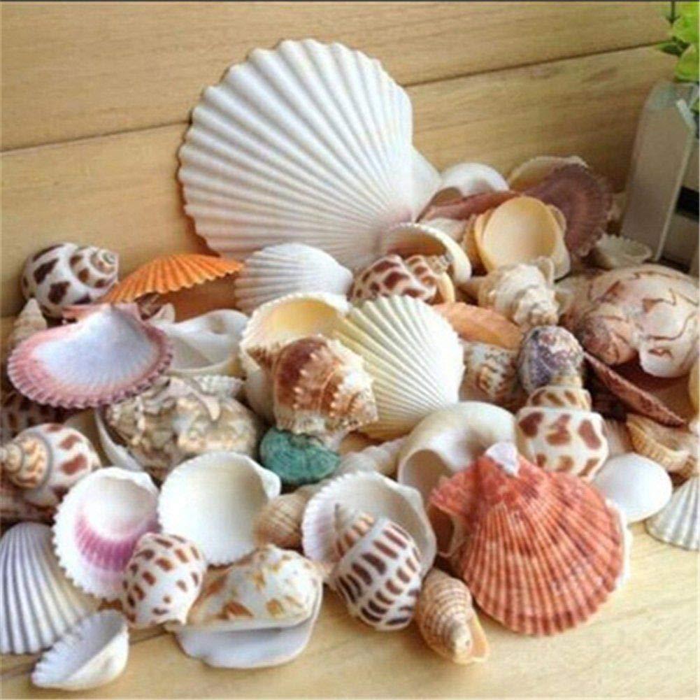 conchas decorativas praia