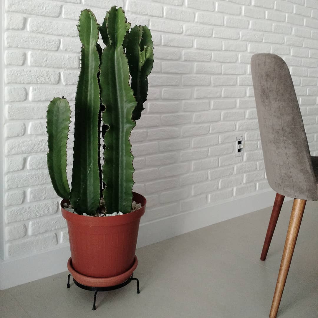 cacto grande na sala com parede de tijolinho