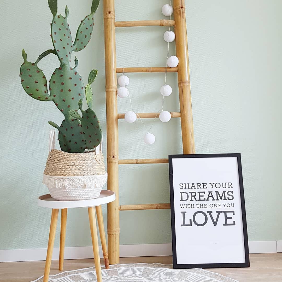 decoração com cacto criativa