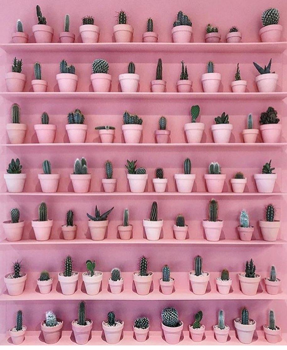 parede de cactos com prateleiras rosa