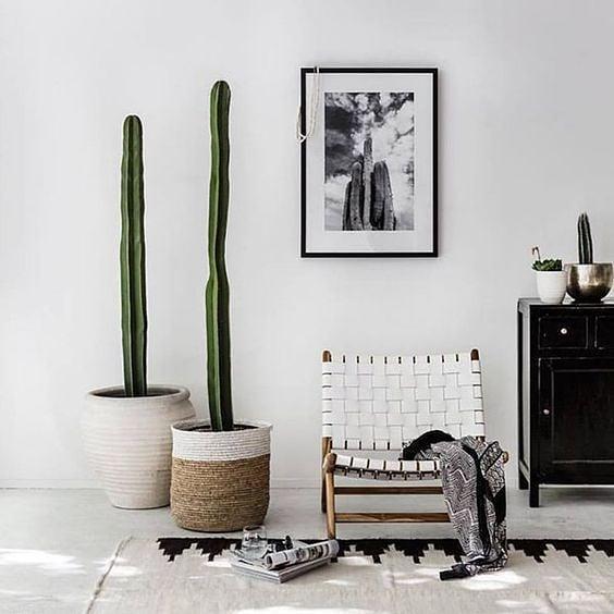 cactos em cestos decorativos decoração minimalista
