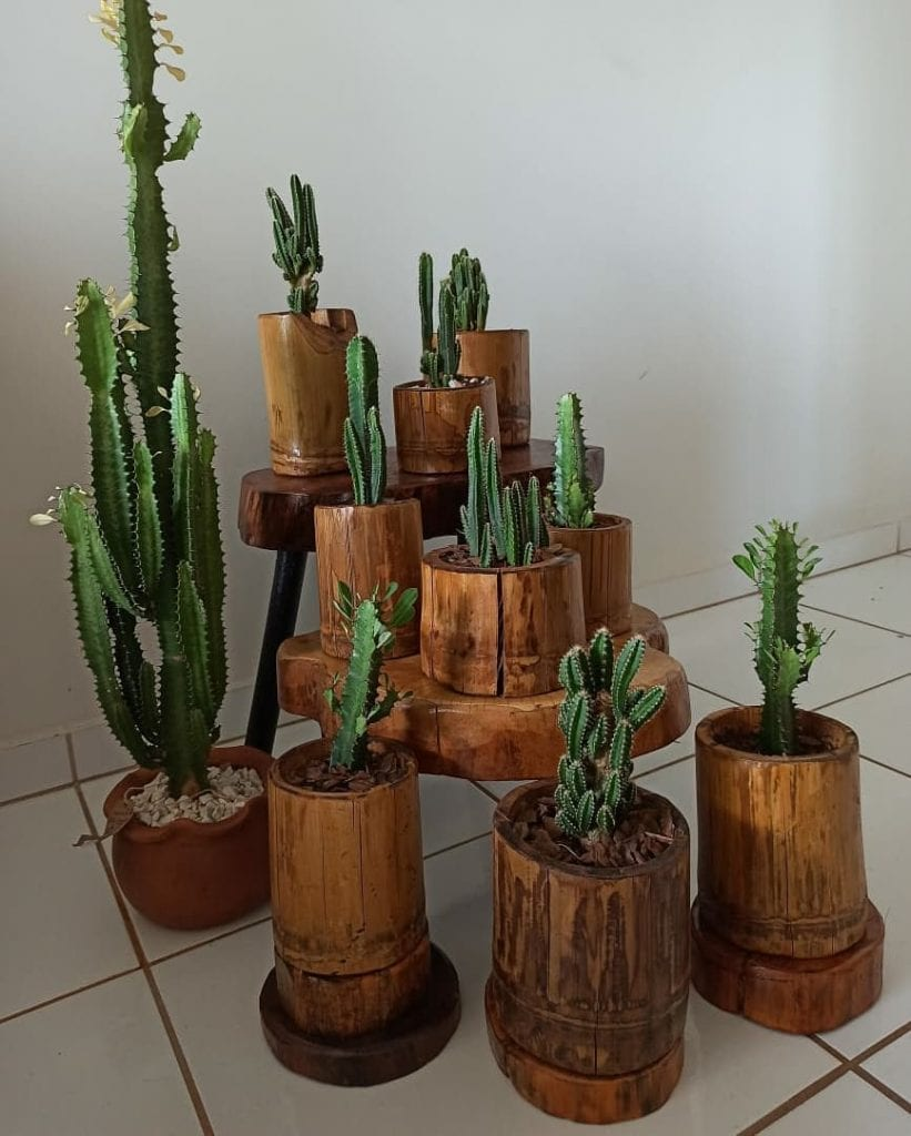 conjunto de cactos em vaso de bambu