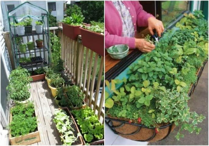 jardim simples com horta na janela