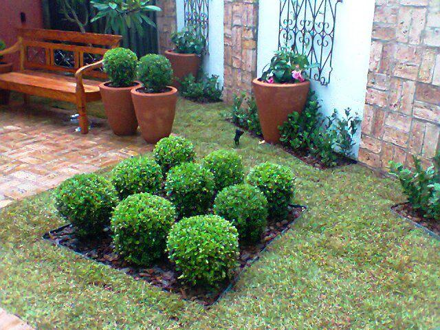 jardim simples com buxinhos