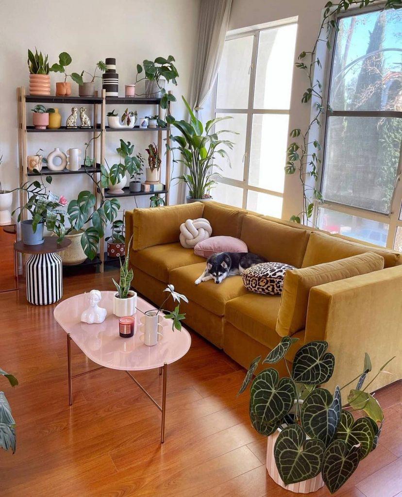 composição de plantas para sala