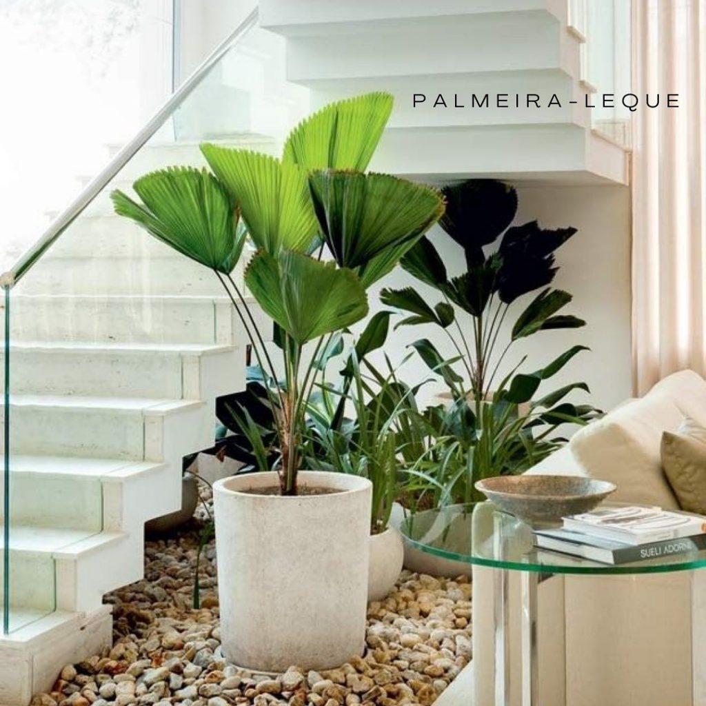 palmeira leque embaixo da escada