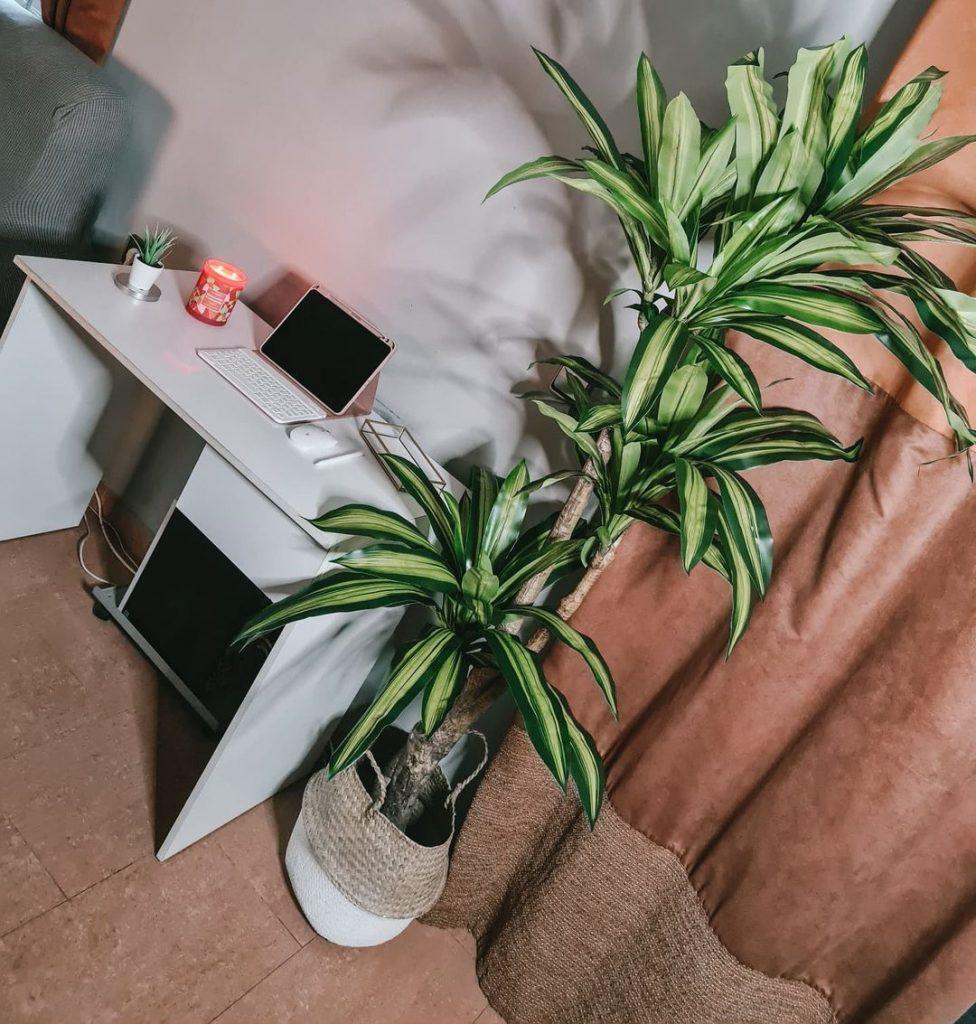 planta na decoração da sala