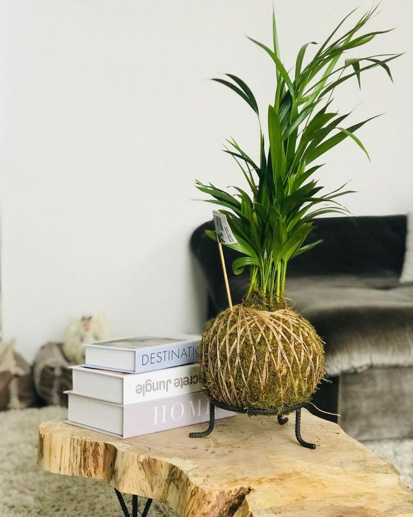palmeira em decoração de sala