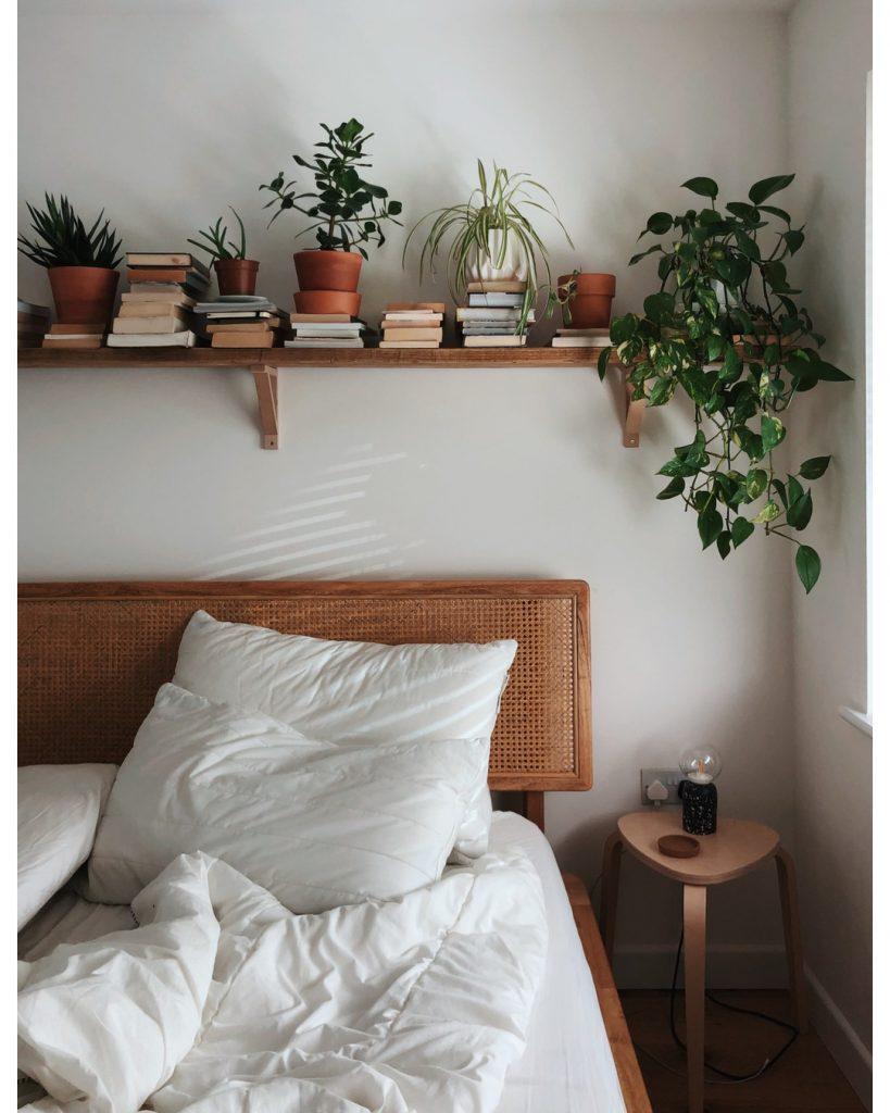 plantas pequenas para quarto