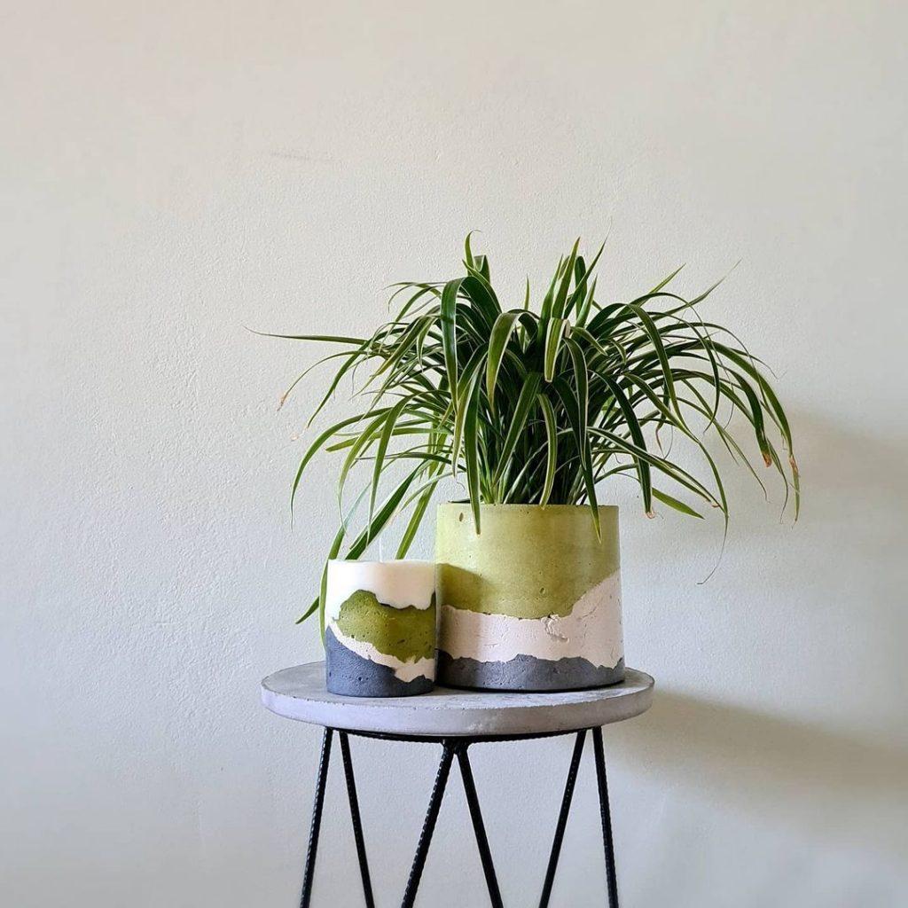 planta clorofito o quarto
