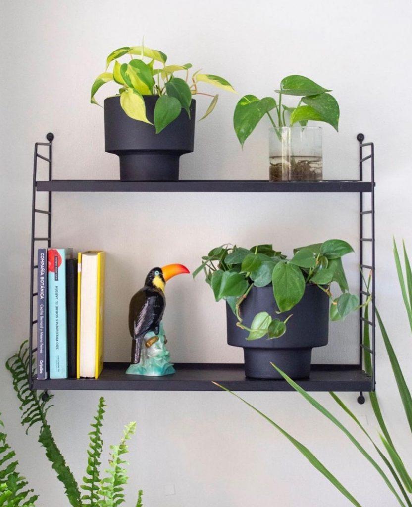 planta filodendro no quarto